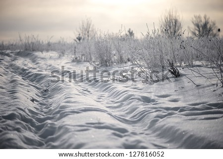Winter in the field - stock photo