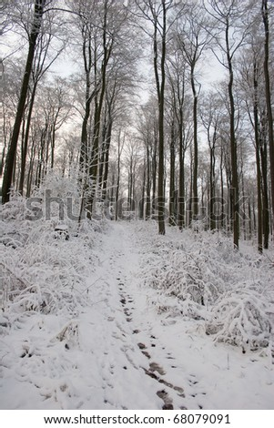 Winter in the Habichtswald mountains near Kassel