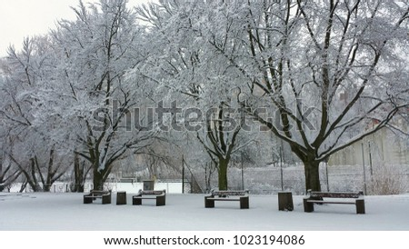 Winter in the park. Empty benches and snow-covered trees.