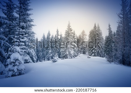 Winter in the woods. New Year`s landscape. Fresh snow on the trees. The effect of color tinting - stock photo