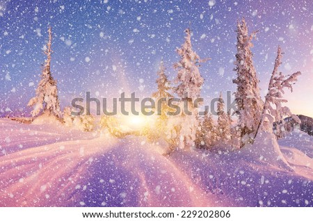 Winter in the woods. Trees under the snow. Evening landscape in the mountains - stock photo