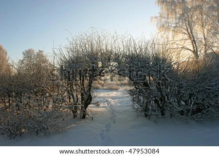 Winter landscape at the dusk (Latvia) - stock photo