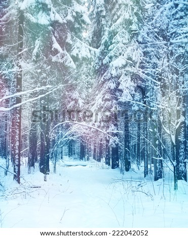 winter landscape, deep in the forest - stock photo