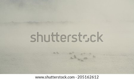 winter landscape flock of ducks swimming in the river in the city park in thick fog - stock photo