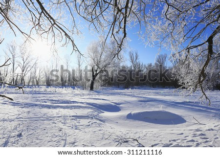 winter landscape frost oaks in sunny frosty morning - stock photo
