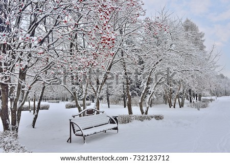 Winter landscape in city park after snowfall with snow covered bench under the rowanberry tree with bright red berries