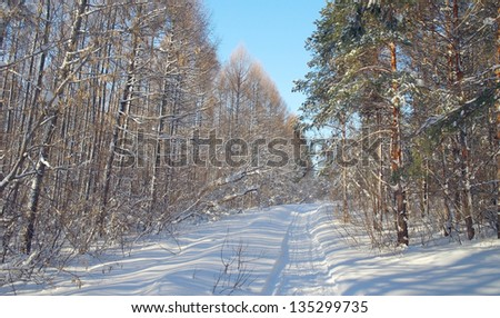 stock-photo-winter-landscape-in-forest-w