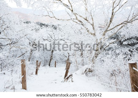 Winter landscape in Taebaeksan mountain, South Korea.