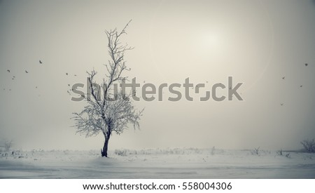 Winter landscape lone tree with flying birds