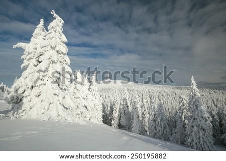 Winter landscape, mountain Praded. Eastern Sudetenland in the Czech Republic. - stock photo