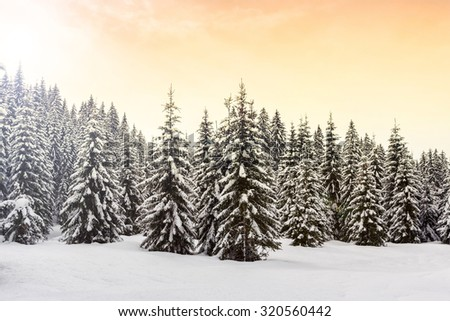Winter landscape near Vogel ski center in mountains Julian Alps, Slovenia - stock photo
