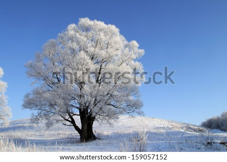 winter landscape of fields and trees covered with snow - stock photo