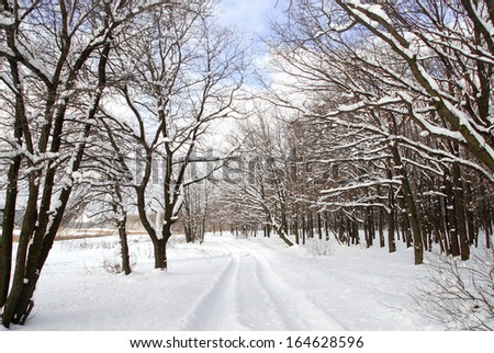 Winter landscape of frosty trees, white snow and blue sky