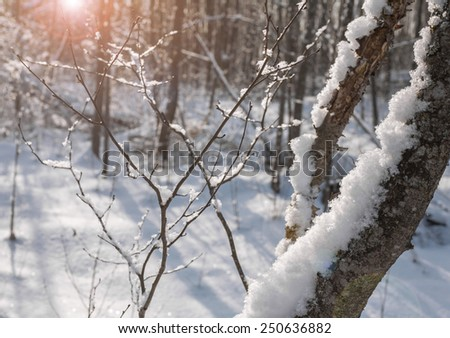 Winter landscape of snowy forest with patches of sunlight through the branches of trees - stock photo