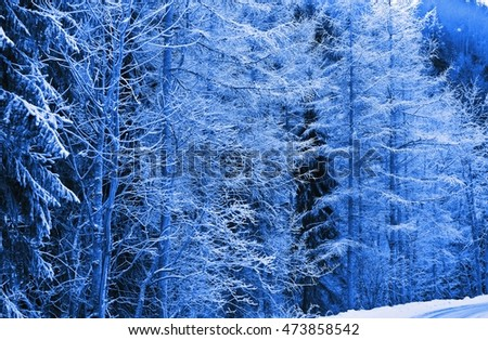winter landscape of trees and forests in various colors, imagination, for wall covering, poster, book