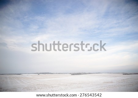winter landscape of young grey forest with bright blue sky