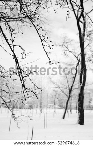 winter landscape, park in snow bw