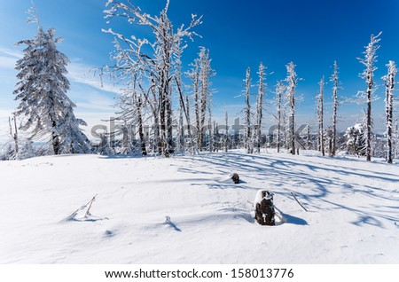 Winter landscape snow covered trees, Beskidy Mountains, Turbacz, Poland