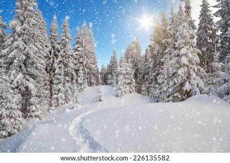 Winter landscape. The trail in the snow. Mountain forest. Carpathians, Ukraine, Europe - stock photo