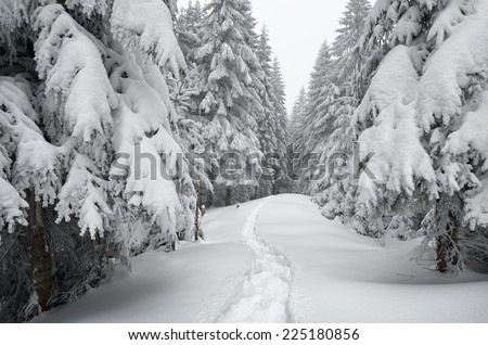 Winter landscape. The trail in the snow. Mountain forest overcast day. Carpathians, Ukraine, Europe - stock photo
