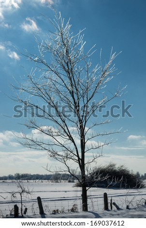 Winter landscape, the tree covered with ice