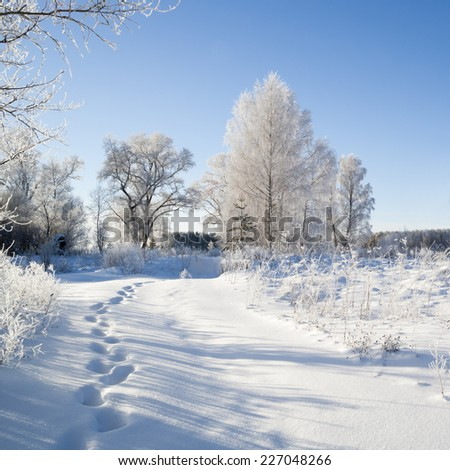 Winter landscape. Trees covered with hoarfrost, deep pure crackling snow. Christmas eve. Frosty day.  - stock photo