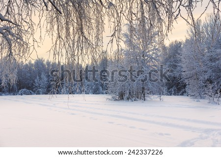Winter landscape trees in forest with field. Selective focus. Copy space - stock photo