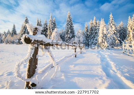 winter landscape trees in iniyi  - stock photo