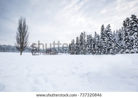 Winter landscape view with pine forest at a cloudy dull day.A small barbecue house on the background