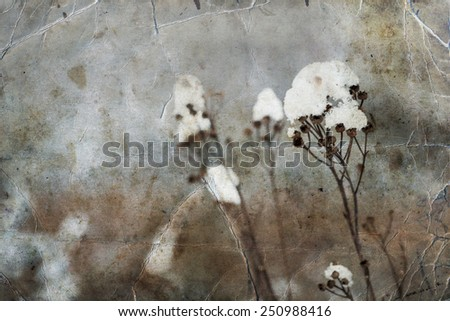 Winter landscape.Winter scene .Frozen weed flowers - stock photo