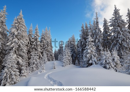 Winter landscape with a path in the woods. Frosty day in a mountain valley. Carpathian mountains, Ukraine, Europe - stock photo