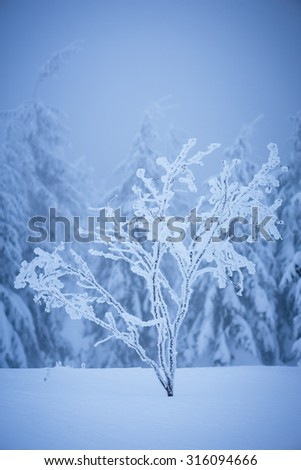 Winter landscape with a tree in frost. Beauty in nature. Color toning - stock photo