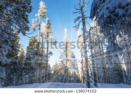 winter landscape with big snow covered trees - stock photo