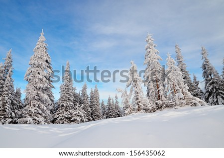 Winter landscape with fir trees in a mountain valley