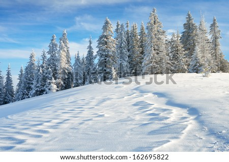 Winter landscape with fresh snow in a mountain forest - stock photo