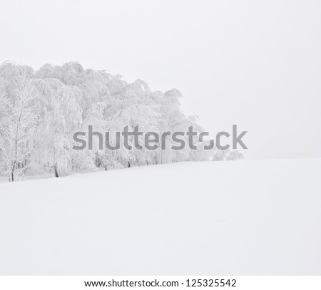 winter landscape with frosted trees - stock photo