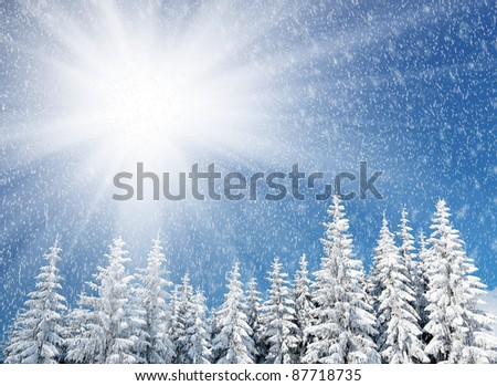 Winter landscape with fur-trees and fresh snow. Ukraine, Carpathians - stock photo