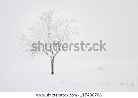 Winter landscape with lonely tree and snow field - stock photo