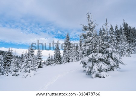 Winter landscape with path in the mountain forest. Cloudy day - stock photo