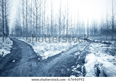 winter landscape with snow and forked road in the forest - stock photo