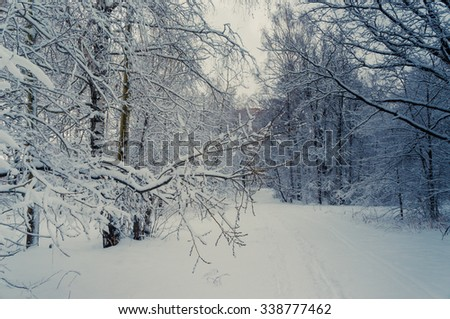 Winter landscape with snow and frozen trees