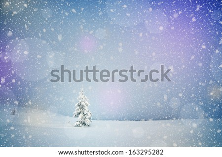 Winter landscape with snow-covered fir-tree in a lonely mountain valley. Christmas theme with snowfall - stock photo