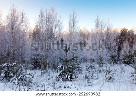 winter landscape with  snowy forest  - stock photo