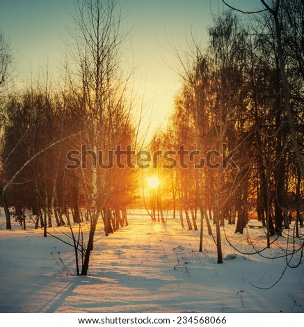 Winter landscape with sunset and forest - stock photo