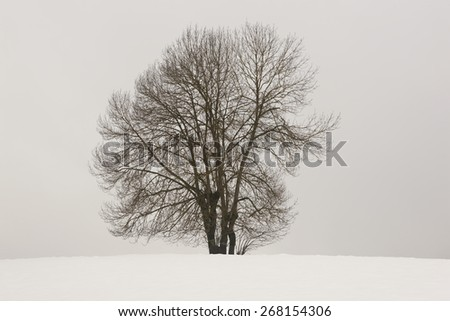 Winter landscape with tree and snow in Navarra, Spain. Horizontal