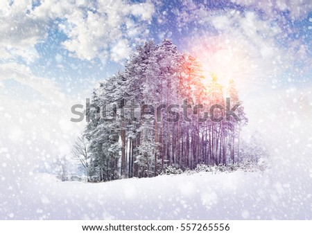 Winter landscape with trees and falling snow by sunset.