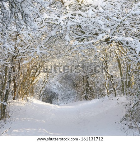 winter landscape with trees covered with snowflakes creating a tunnel of snow leading to sunlight  - stock photo