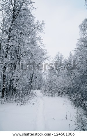 Winter landscape with trees in the forest - stock photo