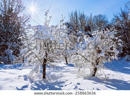 Winter landscape with two trees covered by hard snow and bright sun - stock photo