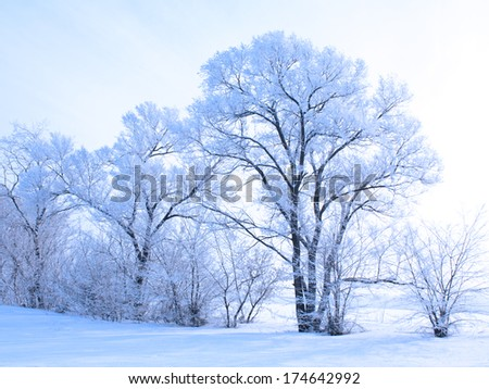 Winter landscape with white trees covered with frost